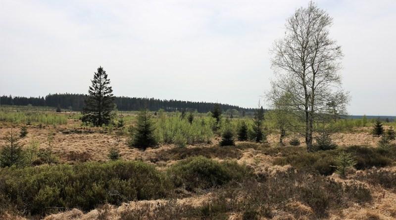 Naturpark Hohes Venn-Eife