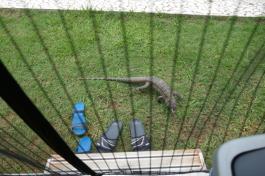 Leguane haben keinen Zutritt
