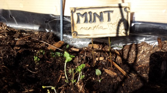 Can't kill mint