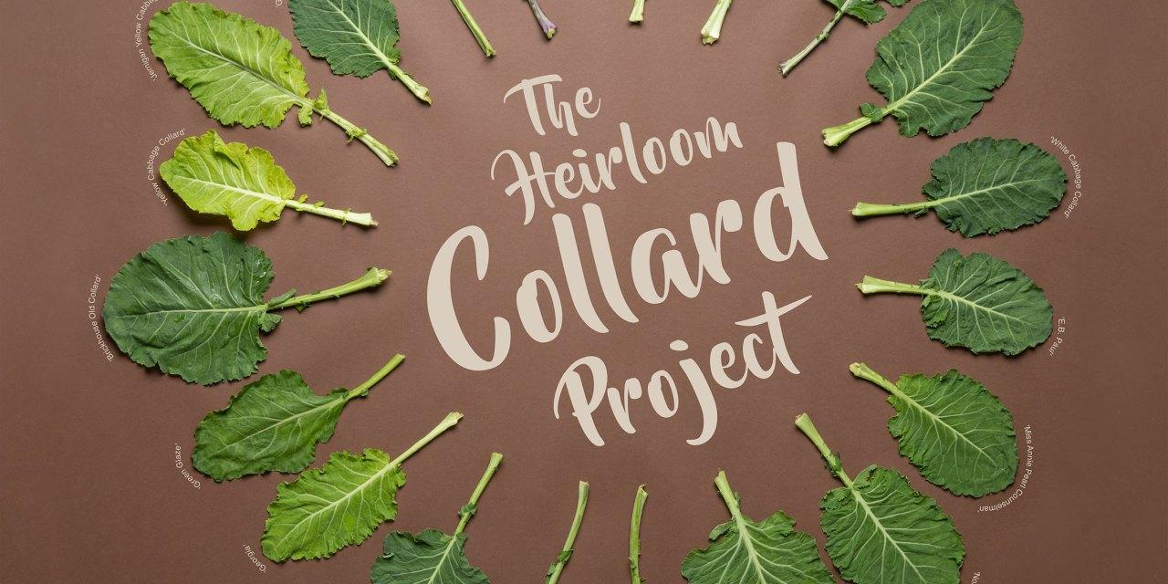 Heirloom collards shine in variety trials