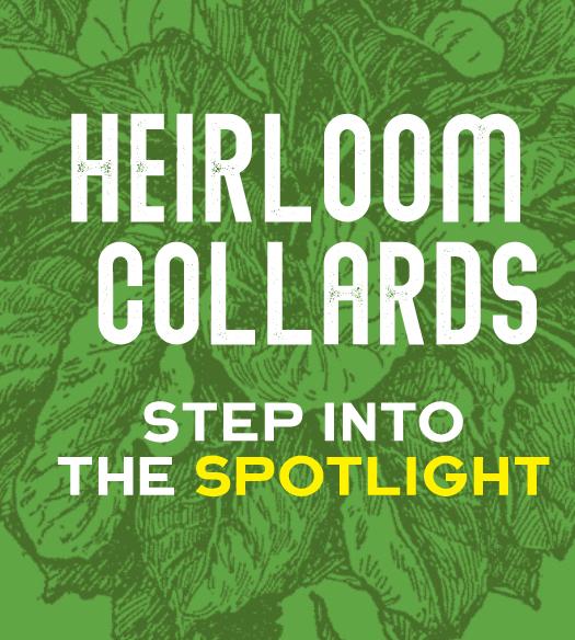 Heirloom Collards in the spotlight