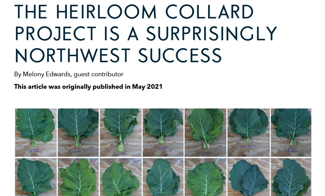 The Heirloom Collard Project is a surprisingly Northwest success