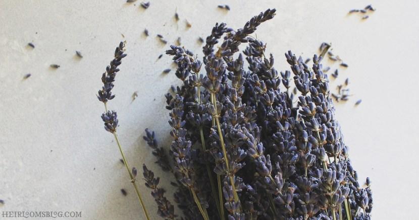 Dark Chocolate-Lavender Tea Cakes - Heirlooms Blog