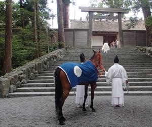伊勢神宮の神馬見参
