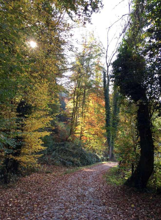 Wald im Herbst