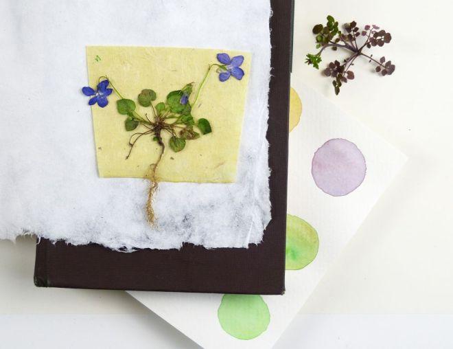Pflanzen schnell pressen. Veilchen auf Naturpapier