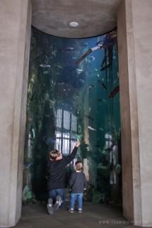 Aquarium Seattle Washington - Hej Doll Simple Modern