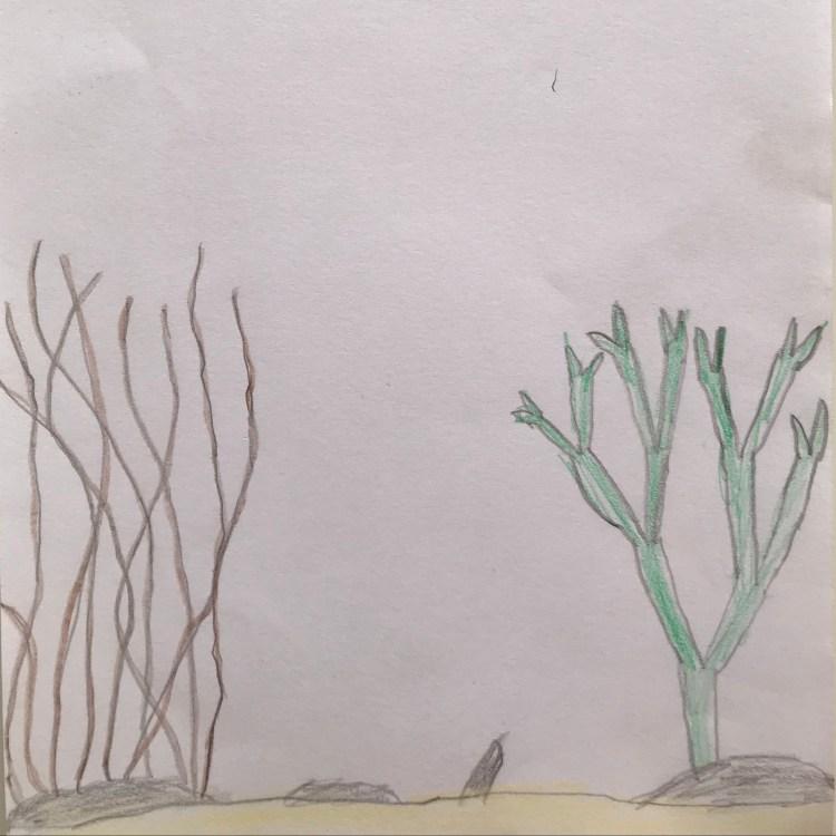 Teckning av snärjtång och karragentång