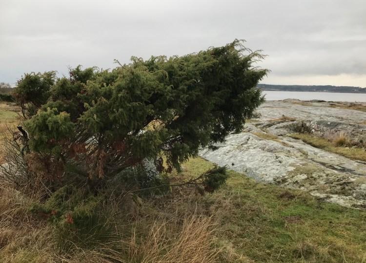Enbuske, Årnäsuddens naturreservat