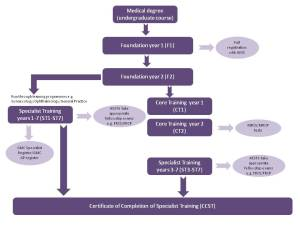 Stages of career progression for a Doctor