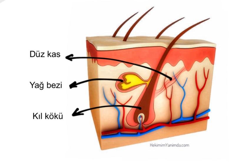 Kıl kökü iltihabı (folikülit), kıl köklerinin iltihabıdır. Kıl folikülleri; kıl kökü, damarlar ve yağ bezlerinden oluşur.