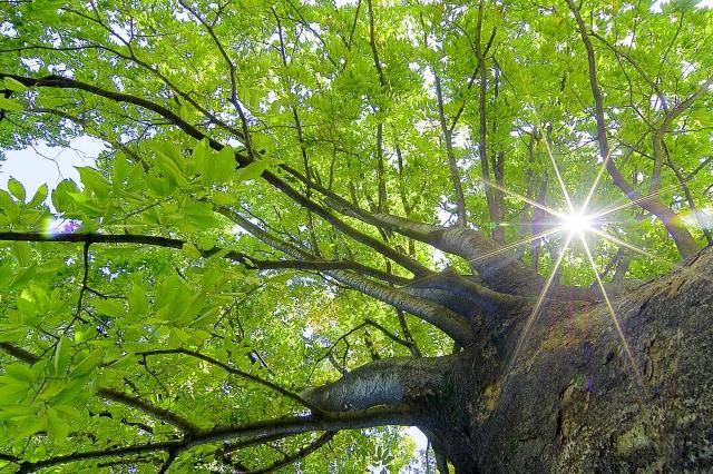 楊定一:陽光,可以說是上天送給人類的「免費營養素」