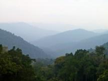 Rwanda National Forest