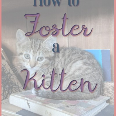 Guest Blog: How to Foster a Kitten
