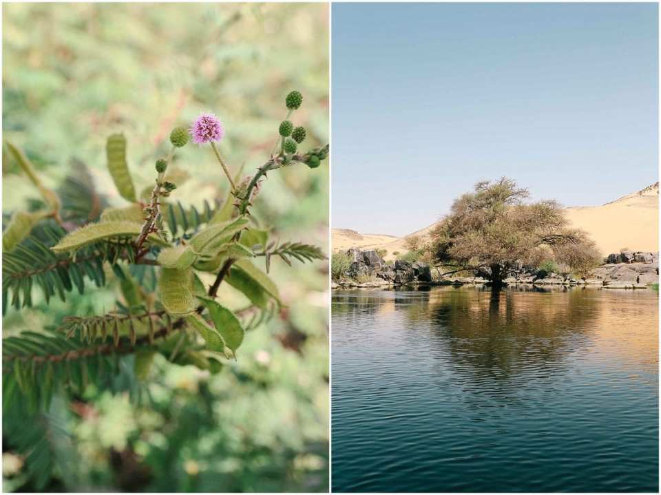 Exploring nature in Aswan Egypt boat to Nubian village