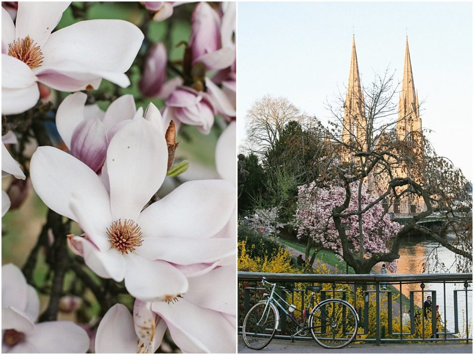 American girl living in France Strasbourg Alsace spring magnolia blooms