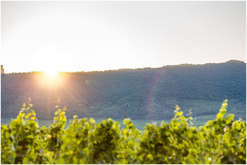 Alsace Vineyards near Strasbourg France American Expat Helena Woods