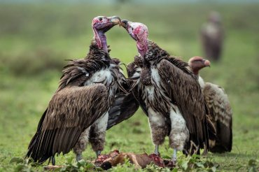 vultures-lovers-fighters-1536