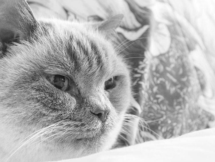 monochrome macro cat