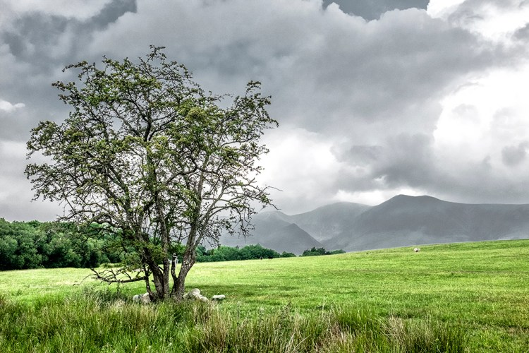 Tree Keswick Lake District Cumbria