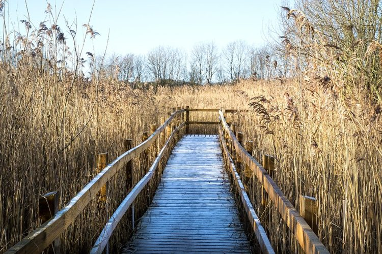 Frost on the Boardwalk Brockholes Nature Reserve