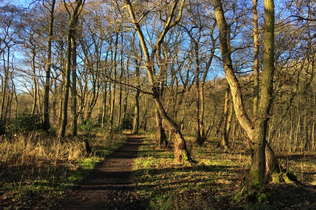 Bolton Woods Brockholes nature reserve