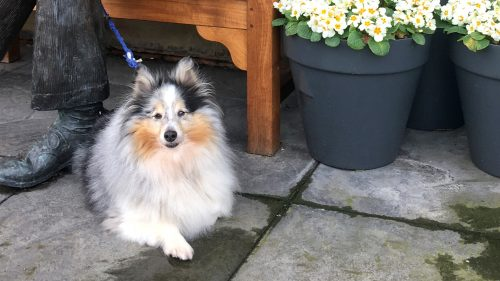 Eddie's Dog man's best friend , garden centre