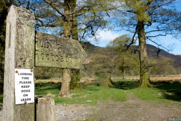 Lambing Time in Borrowdale sign Cumbria Lake District