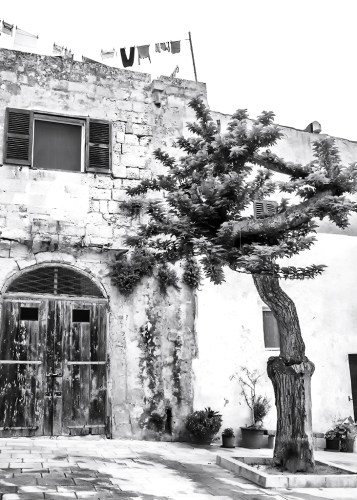 A Tree in the Piazza Mdina Malta Silent City Monochrome Black&White Challenge