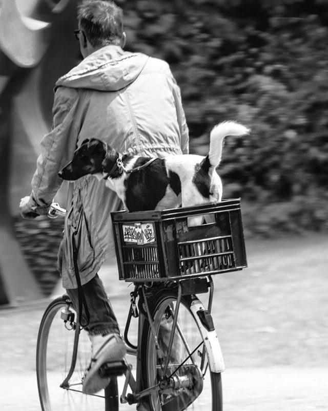 AMSTERDAM: pedal power dog on bike bicycle