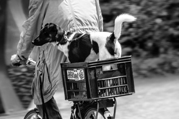 AMSTERDAM: pedal power dog on bike bicycle