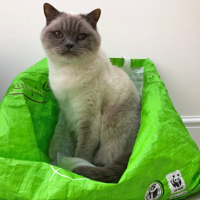 Bluejohn on Green Bag, smile on Saturday, cat,