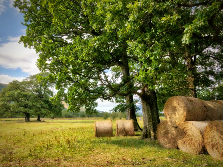 Hay Bales in Borrowdale Lake District Cumbria Silent Sunday