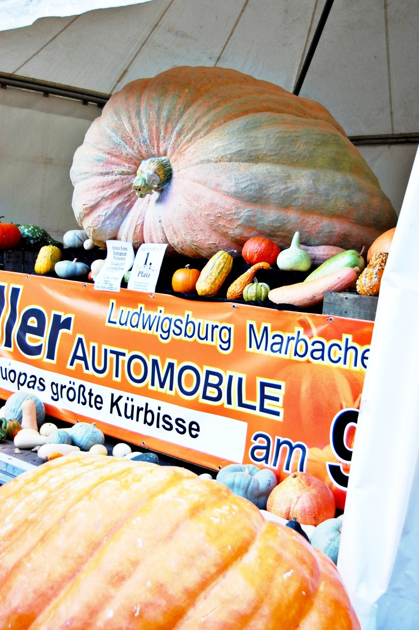 biggest_pumpkin_in_the_world_ludwigsburg
