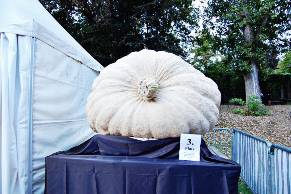 biggestpumpkin
