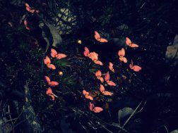 These flowers at Lesmurdie Falls (Western Australia) were so much like butterflies I had to take a photo! My camera was set to an odd lighting filter and this is exactly as it turned out - a happy accident if ever there was one :)