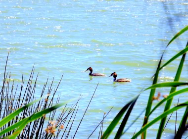 Birds of a feather....float together? I took this on a day out with my Dad and youngest brother at Herdsman Lake in Perth.