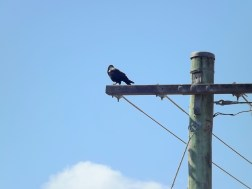 BIRDS ON A WIRE 3