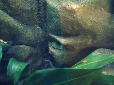 Two frogs at the Perth zoo were best friends...or maybe more!