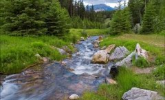 Mountain Stream...Found in the Sunlight