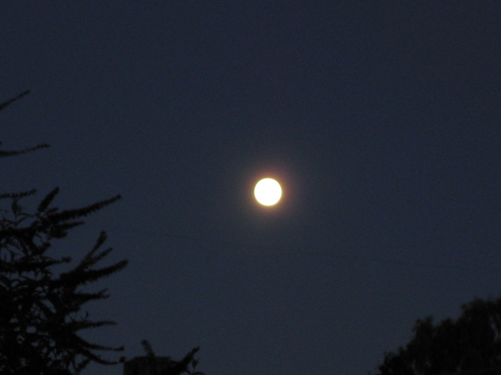 Once in a blue moon, there's a blue moon. I shot this from my backyard, looking up and beyond. <br data-recalc-dims=