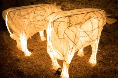 The ghost cows in Myers Bottom cowhouse
