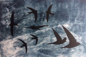 Swifts Helen Peyton