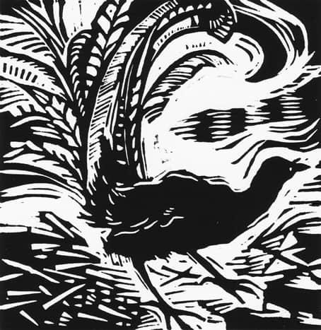 Lyrebird linocut $75