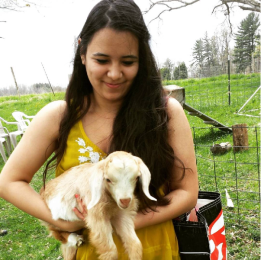 Me at the Laughing Goat Fiber Farm 2014