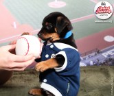 Rescue a puppy - San Diego Padres | Helen Woodward Animal Center