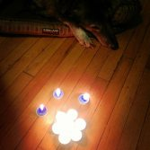 dog paw by candles paw