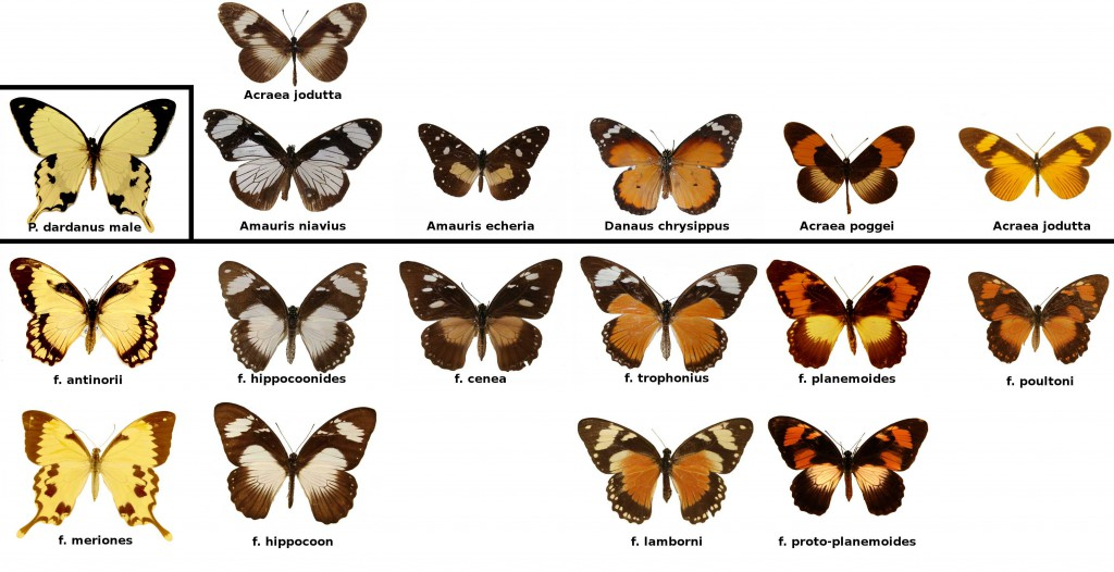 Butterfly Genetics Group: Martin Thompson