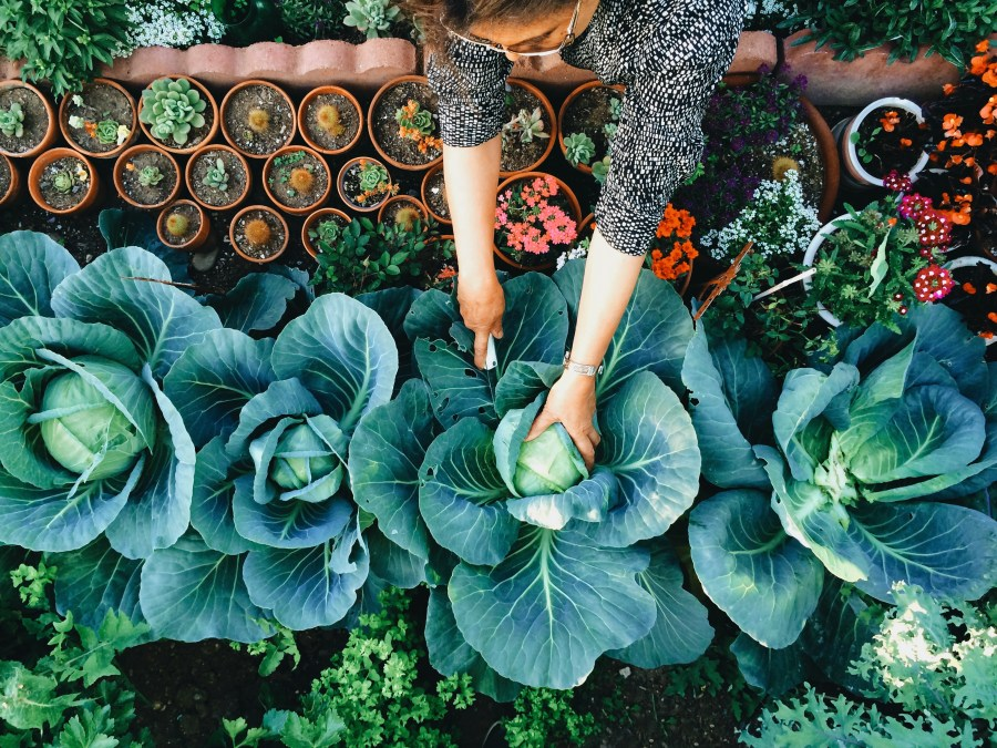 Follow these experts to grow the garden of your dreams.