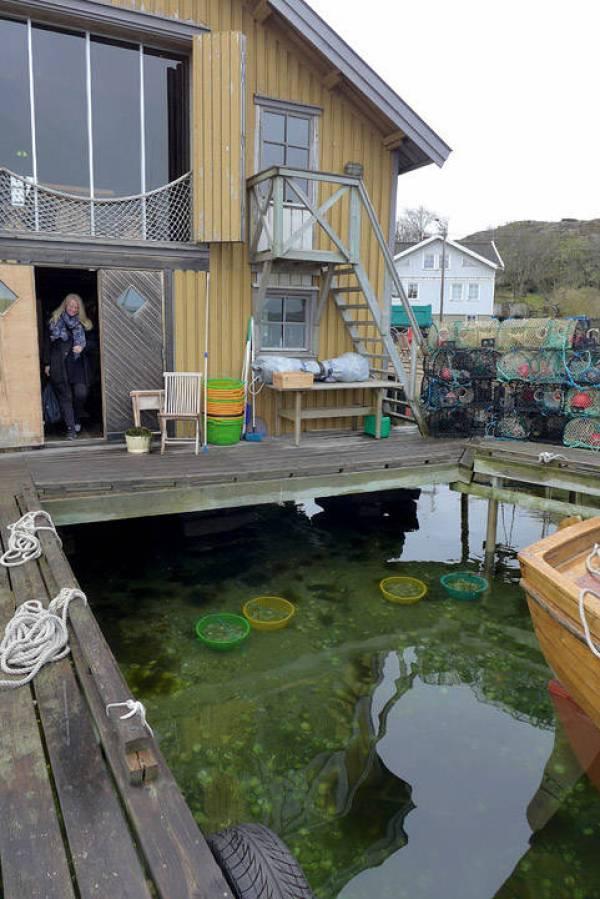 Everts sjøbod med østersbøtter rett nedenfor bryggen.